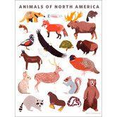 Kids room - Found it at AllModern - Animal of North America Canvas Art