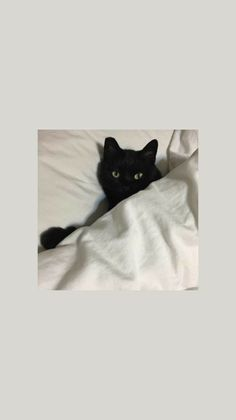Можете брать:) Cute Cat Wallpaper, Mood Wallpaper, Locked Wallpaper, Pastel Wallpaper, Tumblr Wallpaper, Animal Wallpaper, Aesthetic Iphone Wallpaper, Screen Wallpaper, Wallpaper Backgrounds