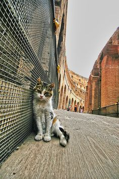 Coloseo Cat | This stray cat was hanging out at the Colloseu… | Flickr