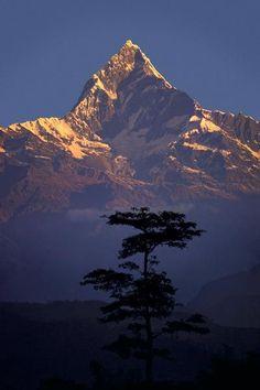 Machapuchare o świcie, Himalaje, Nepal przez Galen Rowell Fotografia.