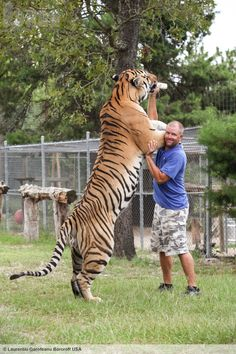 Sanctuary owner Carl Bovard wrestling with 5-year-old Siberian tiger Sampson in…