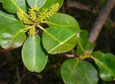 Hoselink Blog Gardening 13 Poisonous Plants