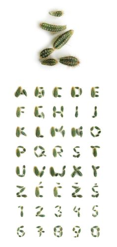 Cactus Type - Vladimir Koncar - The haphazard style of the typeface creates an effective visual aesthetic. Typography Served, Typography Alphabet, Typography Fonts, Graphic Design Typography, Lettering, Typographic Poster, Typographic Design, Typography Inspiration, Graphic Design Inspiration