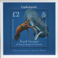 South Georgia & South Sandwich Islands Postage Stamp, Colossal Squid & Sperm Whale