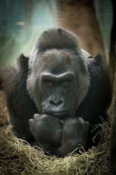 (Courtesy: Columbus Zoo and Aquarium)