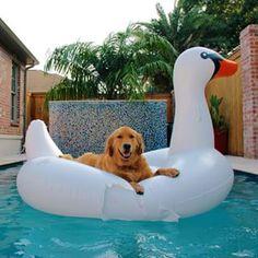 Mom, I LIKE this bird!
