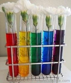 Try this science experiment with children over the course of several days. Fill up 4 vases with different coloured water and put 1 white carnation in each one. Watch the flowers over the next four days change to the colour of the water.