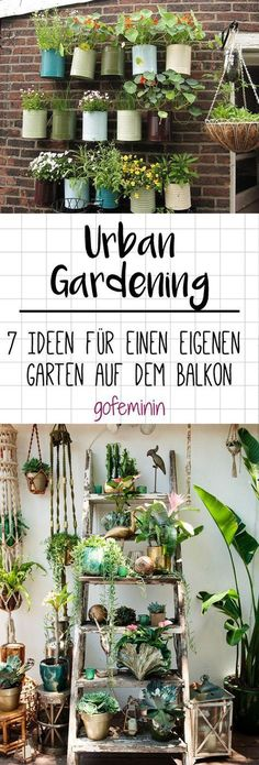 Urban gardening: 7 ideas for your own vegetable garden on the balcony - Urban g. - Urban gardening: 7 ideas for your own vegetable garden on the balcony – Urban gardening: 7 ideas for your own garden on the balcony – Garden Types, Balcony Plants, Indoor Plants, Balcony Gardening, Indoor Herbs, Fairy Gardening, Indoor Gardening, Organic Gardening, Gardening Tips
