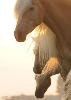 Another beautiful image of horses. #CowboyWayofLife