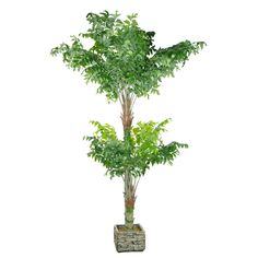 3M Artificial Fishtail Kwai Palm 18 Leaves Small Palm Trees, Small Palms, Fishtail, Herbs, Leaves, Gardening, Plants, Lawn And Garden, Herb