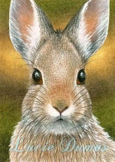 ACEO art print Hare 18 rabbit bunny, painting by Lucie Dumas Bunny Painting, Painting & Drawing, Watercolor Animals, Watercolor Paintings, Acrylic Paintings, Watercolors, Animal Paintings, Animal Drawings, Wild Bunny