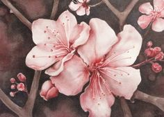 flower art print cherry blossoms watercolor by favoriteflower, $10.00