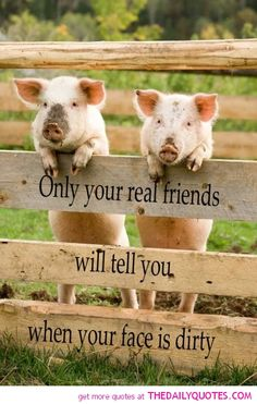 Thank God for real friends! I can always count on my real friends to tell me what I need to hear to make me a better person and to help me see things from another's point of view. Only true friends loves you enough to do that. This Little Piggy, Little Pigs, Southern Sayings, Some Quotes, Daily Quotes, Real Friends, Work Friends, Farm Life, Country Life