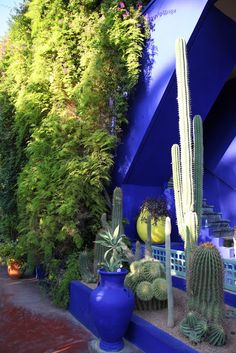 One of the highlights from Marrakech, Morocco was visiting Jardin Majorelle. In 1923, the french painter Jacques Majorelle fell in love with the intense light of Morocco and built himself a Moorish villa around which he designed a luxurious garden and a separate bright blue studio.  The garden was opened to the public in 1947 and was later bought and restored by fashion designer Yves Saint Laurent and his partner Pierre Berge in 1980.