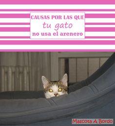 El tema de porqué nuestros gatos dejan de usar el arenero, nos lleva de cabeza a muchos.🐈😵 Pero en este artículo ese misterio queda desvelado.🐱💙