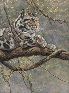 Clouded Leopard Painting - Male Clouded Leopard by Alan M Hunt Big Cats Art, Cat Art, Wildlife Paintings, Wildlife Art, Nature Animals, Animals And Pets, Beautiful Cats, Animals Beautiful, Rusty Spotted Cat