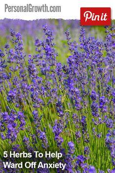5 Herbs To Help Ward Off Anxiety