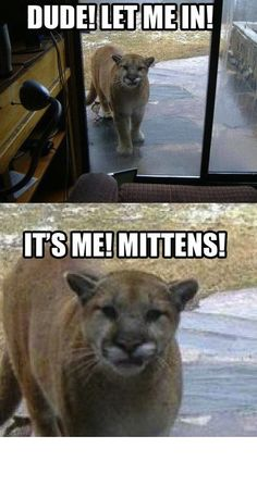 Mittens, the cat you lost one month ago, returned to your house one day. You couldn't believe it.