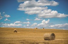 hvg.hu - Itthon: Földmutyi újratöltve? Az agrárminiszter szerint a haszonbérlők előnyt élveznek majd az állami földek árverésein