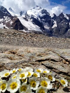 La Diavolezza, Grisons - Switzerland  ©JaneQuillerat Repinned by www.gorara.com