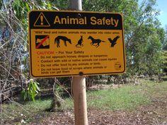 More wild animals in Oz!