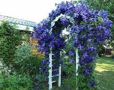 Почему у одних клематис растет почти как сорняк, а у других чахнет и не цветет? Маленькие секреты покажут вам как вырастить клематис у себя в саду. Landscaping Supplies, Landscaping Tips, Clematis, Landscape Plans, Landscape Design, Vegetable Garden, Garden Plants, Climbing Vines, Garden Care