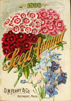 'Seed Annual' D. Ferry & Co 'Seed Annual' D. Ferry & Co 'Seed Annual' D. Ferry & Co READ DIY plant stacks.