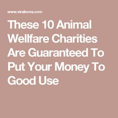 These 10 Animal Wellfare Charities Are Guaranteed To Put Your Money To Good Use