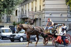 Naples Horse Carriage