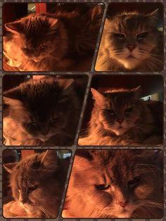 愛猫さくら姫|SHOOP+FACTORY(シュープ・ファクトリー)@オーナーブログ-92ページ目