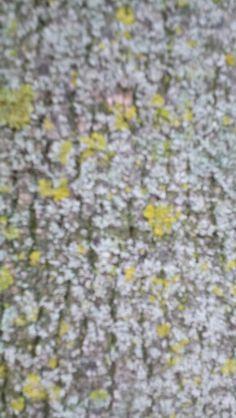 opdracht structuur #4 natuurlijke structuur een boom