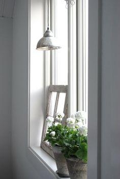 flowers in the window- Pelargonium
