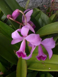 Orquídeas roxas. by Elias Rovielo,
