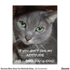 Russian Blue Gray Cat Attitude Humor Postcard