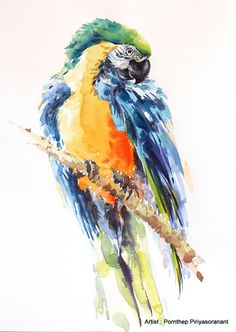 Macaw  Parrot  bird  Bird watercolor painting by OrientalArt2029