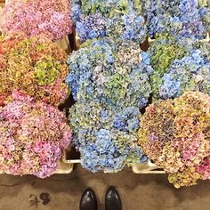 A sea of heavenly hydrangea at Alagar at @MarketFlowers this morning! #photooftheday #floweronacaptures