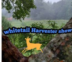 "Hey if y'all are looking for a good Channel that has lots of outdoors!! Then you have found the right place!! Go Check out "" whitetail Harvester"" . . . . . . #bowhunting #foodplots #plot #deermanagement #management #food #denverdeerscents  #deerscents #bucksinruteer #bucks #does #doe #huntin#hunting #bow #hunt #hunter #hunters #rut #deerhunter #bowhunter #whs #white #tail #harvester #show #whitetail #whitetailharvester #whitetailharvestershow…"