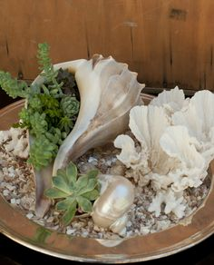 succulents in shells