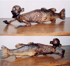 The Fiji Mermaid: a hoax created by Moses Kimball and PT Barnum in 1842 and displayed to the public as a mermaid. It was in actuality a monkey corpse sewn to a dried fish tail.