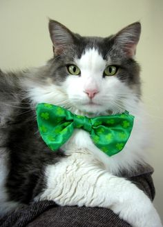 St. Patty's Day Pets -- Colin the Kitty