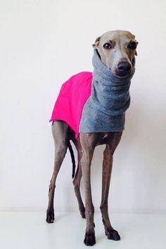 Warme Sofshell Jacke für italienische Windhunde