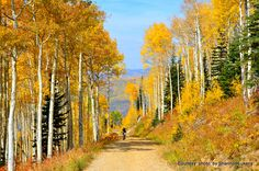 Steamboat Springs is not just a ski destination. Steamboat makes a great destination year round, but it's especially breathtaking in the fall.