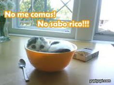 imagenes de gatitos lindos - Buscar con Google
