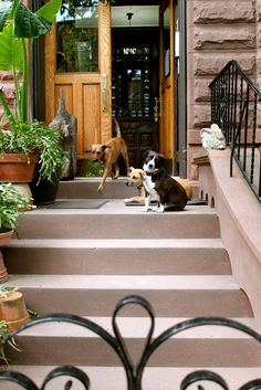Stoopin' Around: Stoops in Cobble Hill