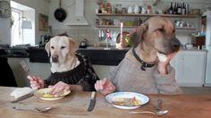 """7 veces en la vida en que los animales hicieron las cosas mejor que nosotros - La vida es dura, todos sabemos eso. Algunos días son peores que otros. Y a veces tenemos que preguntarnos: """"¿Por qué hiceeso?"""" Todos hemos estado allí en algún momento u otro. En vez de pensar en el pasado, vamos a aprender para el futuro. Tan sólo mira a estos animales que están hac... #Entretenimiento=Relajateydisfruta..., #REF  http://www.vivavive.com/7-veces-en-la-vida-e"""