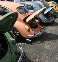 Beetle line up