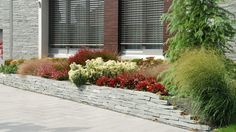 Retaining wall with perennials/Támfal évelőkkel Contemporary Garden, Perennials, Sidewalk, Wall, Side Walkway, Walkway, Walls, Perennial, Walkways