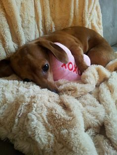 dogs deserve Valentine's Day presents too