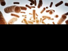 Bifidobacterium Breve Probiotic Supplement Review, Benefits & Side Effects