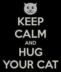 Keep Calm and Hug Your Cat Tap the link Now - All Things Cats! Crazy Cat Lady, Crazy Cats, I Love Cats, Cool Cats, Gatos Cool, Calm Quotes, Quotes Quotes, Life Quotes, Cat Boarding